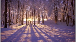 36-winter-sunrise-wallpaper