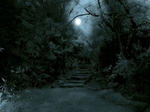 dark forest spot