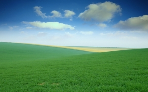 green_field_wallpaper-wide