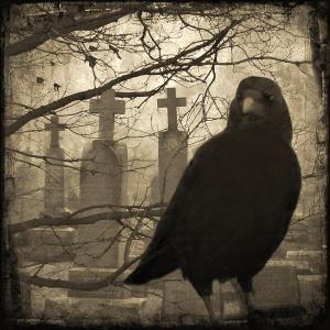 her-graveyard-gothicolors-with-crows