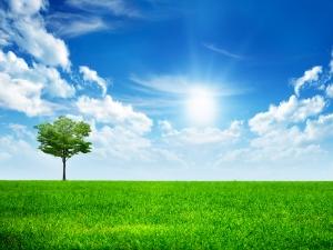Sunny-day1