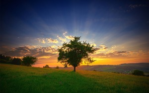 TGraphic_com-Full-Nature-tree-sunset
