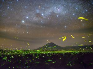 fireflies-stars-night_89915_990x742
