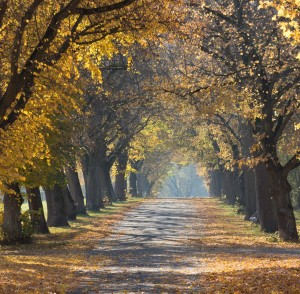 trees-1030853_1920-300x294